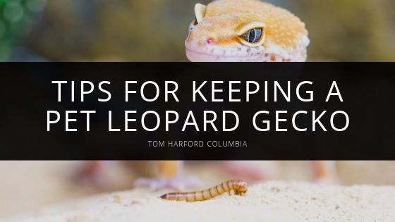 Tom Harford Columbia - Care and Keeping Of Your Pet Leopard Gecko
